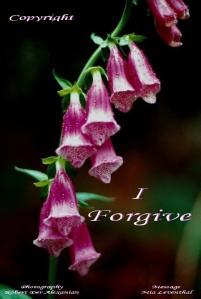 i forgive copyright